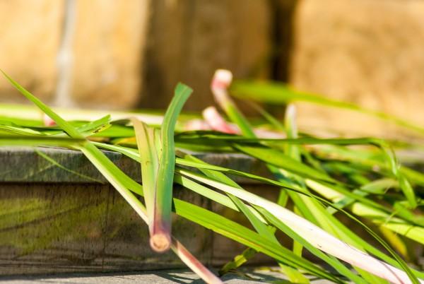 zielone swiatki 2